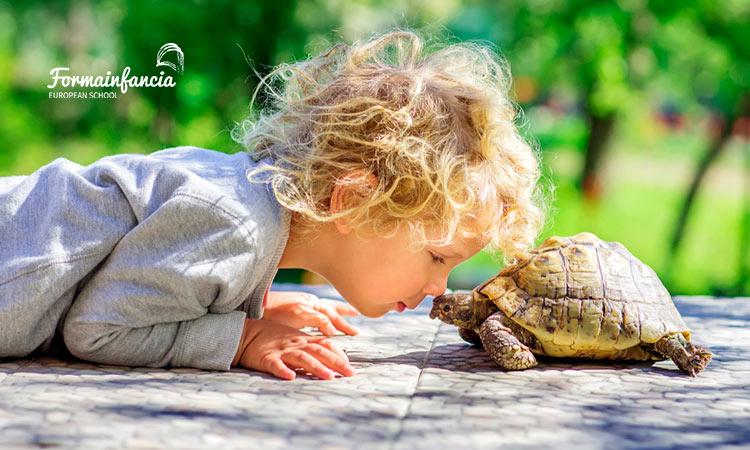 Cómo aplicar la técnica de la tortuga en niños impulsivos
